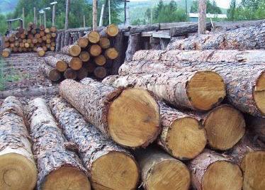板枋材原木