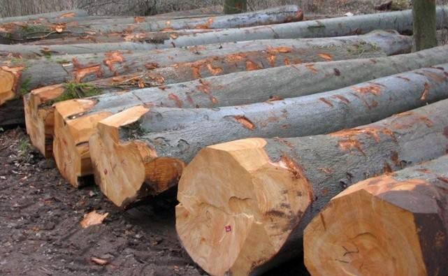 国数源-橡木