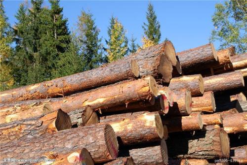 国数源-锯木