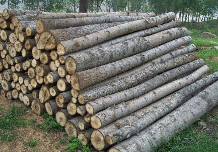 国数源-林木