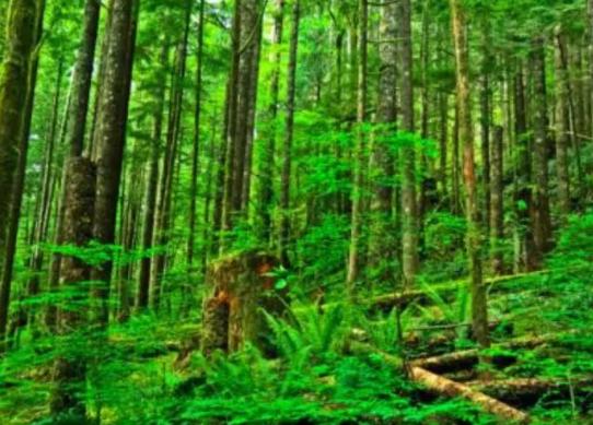 越南欧盟达成协议:减少非法采伐,促进木材贸易-木材市场
