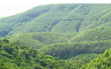 英国:林木采伐证可在线申请-黄花梨木