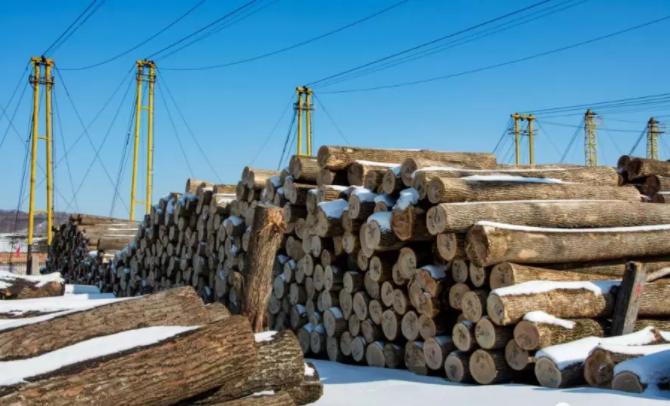 哈萨克斯坦东部地区计划增加木材产品出口-木材种类