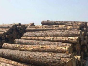 越南欧盟达成协议:减少非法采伐,促进木材贸易-酸枝木
