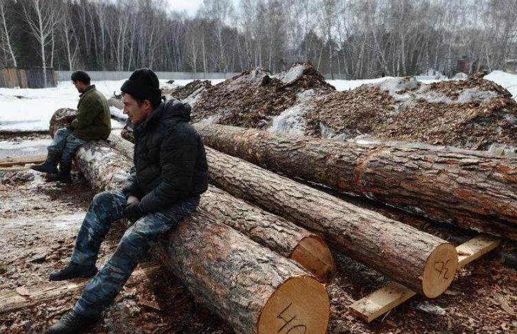 俄联邦《林地恢复补偿法》正式生效-红木餐桌