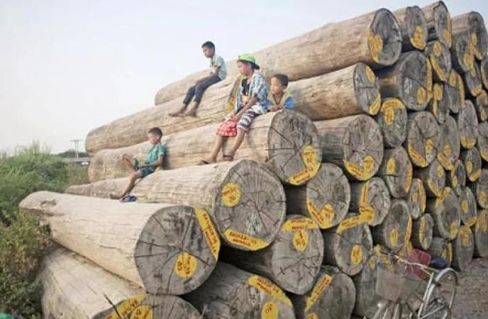 越南木材.png