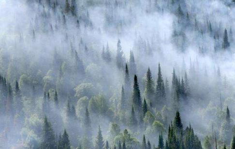 联邦林业非法采伐.png