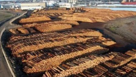 木材贸易.png